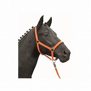 Orange Et Vert Dunkerque : licol cheval fluo hkm jaune orange vert bleu shetland au ~ Dailycaller-alerts.com Idées de Décoration