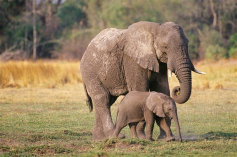 Crime ring trafficked ivory, rhino horns and heroin