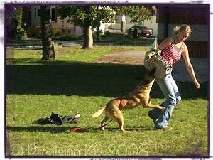 personal protection dog training With precision dog training