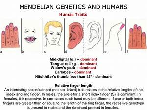 07 mendelian genetics and humans