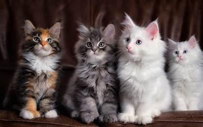 Cats Laptop Wallpapersafari Wallpapers Desktop Wallpapertag Mobile