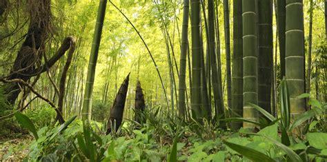 Jardin De Bambou Lyon by Le Jardin Exotique Les Plus Beaux Jardins De France