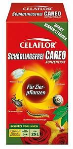 Celaflor Schädlingsfrei Careo Konzentrat : celaflor sch dlingsfrei careo konzentrat uhlig kakteen ber 5000 verschiedene arten ~ A.2002-acura-tl-radio.info Haus und Dekorationen
