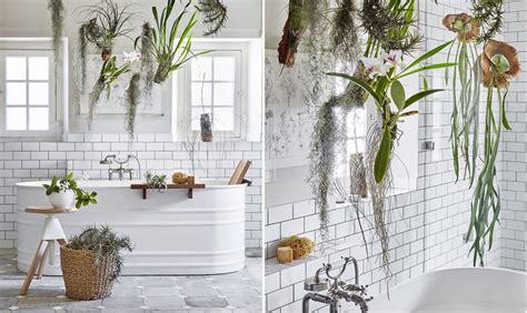 Le piante da mettere in bagno: tillandsie e orchidee