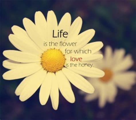 quotes  yellow flowers quotesgram