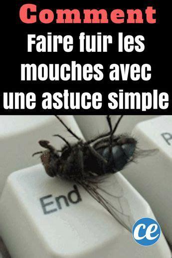 faire fuir les mouches comment je fais fuir les mouches avec une astuce toute