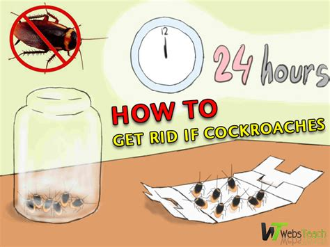 how to get rid of cockroaches in kitchen cabinets 6 easy ways to get rid of cockroaches webs teach