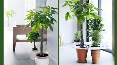 plante de bureau feng shui de grandes plantes d intérieur pour janvier