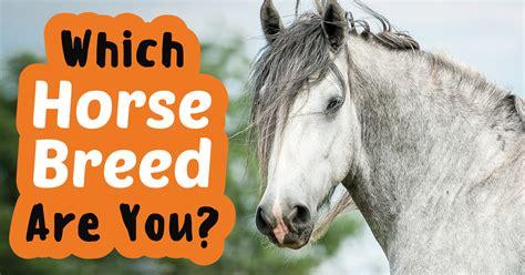 horse breed which quiz quizony index