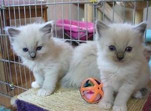 Offre Telepeage Gratuit : offre chaton gratuit chien bonheur ~ Medecine-chirurgie-esthetiques.com Avis de Voitures