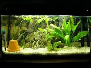 Aquarium Einrichten 60l : bis 54l besatz f r 54 liter aquarium forum ~ Michelbontemps.com Haus und Dekorationen