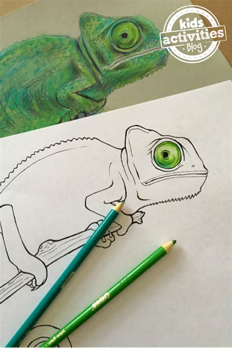 chameleon coloring pages  kids