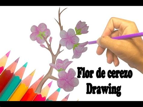 Como dibujar Flor de cerezo How to draw flowers ? YouTube