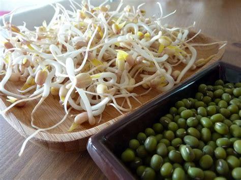 cuisiner des pousses de soja les pousses ou germes de soja cuisine bio et les