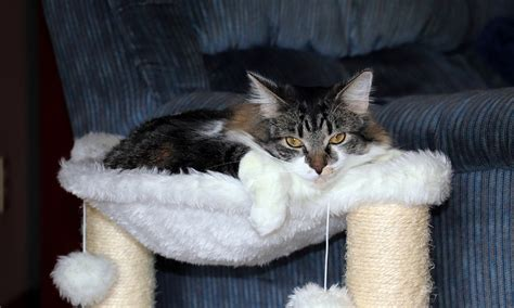 amaca gatti amaca per gatti come orientarsi il mio gatto 232 leggenda