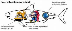 Anatomy Of A Street Shark