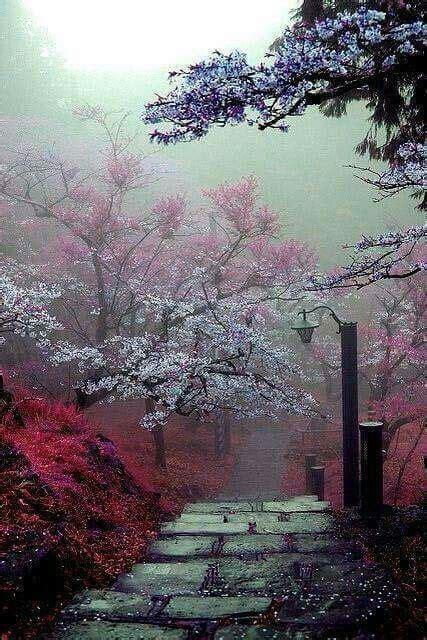 hermoso paisaje de japon en realidad una excelente