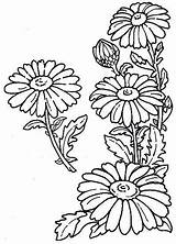 Daisy Corner Drawing Flower Doodles Coloring Outline Flowers Embroidery Drawings Pattern Sunflower Dz sketch template