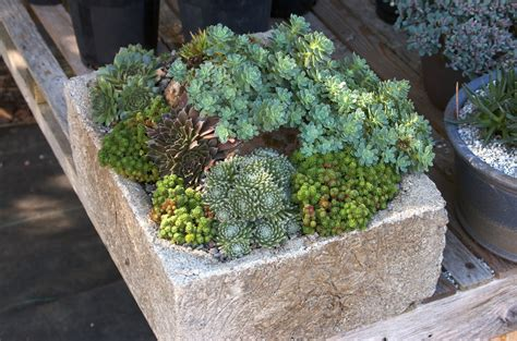 how to plant succulents in containers wild ginger farm news blog saturday class quot plant a succulent container