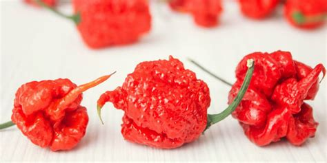 smokin eds carolina reaper wins  hottest chili pepper
