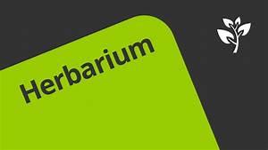 Was Ist Ein Herbarium : ein herbarium anlegen biologie botanik youtube ~ A.2002-acura-tl-radio.info Haus und Dekorationen