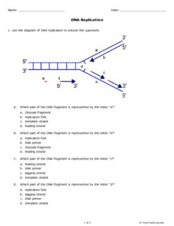 Dna Replication (grades 1112)  Free Printable Tests And Worksheets Helpteachingcom