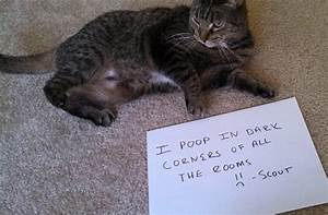 cat shaming featuring beamer and scout thatmuttcom a With cat shits on floor
