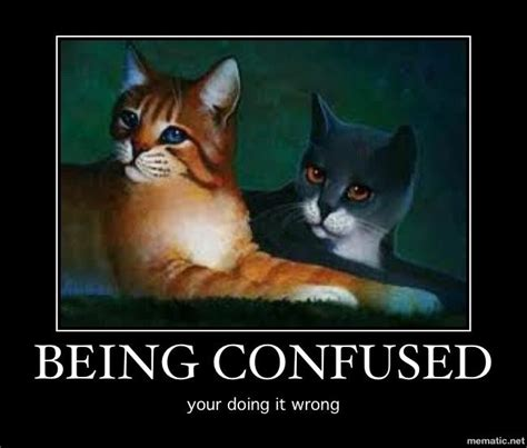 Warrior Memes - 24 best images about funny warrior cats on pinterest adoption word of advice and warrior cats