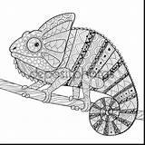 Coloring Chameleon Printable sketch template