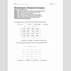 Collection Of Dihybrid Crosses Worksheet Bluegreenish