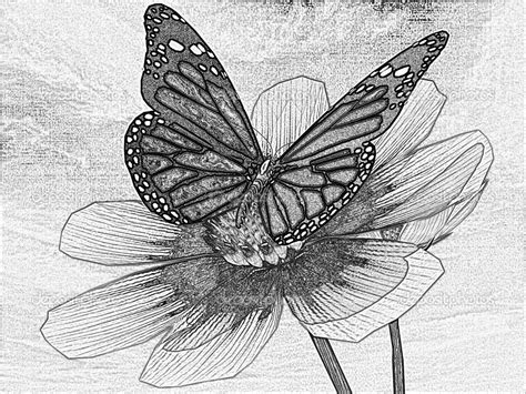 Amazing Pencil Drawings Flowers