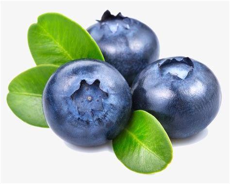 blueberry fruit food png transparent image  clipart