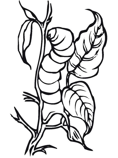 insect coloring pages    print