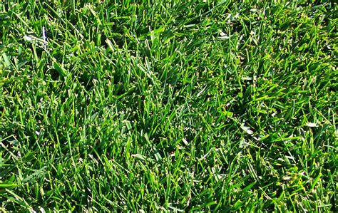 types of grasses arco lawn equipment overview types of grass