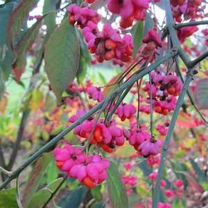 Immergrüne Winterharte Kübelpflanzen : fruchtschmuck archive gartengruen 24 blog ~ Markanthonyermac.com Haus und Dekorationen