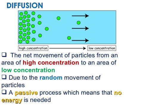 biological examples  diffusion