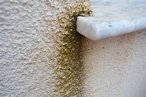 Schimmel Von Der Wand Entfernen : schimmel entfernen von der wand die besten mittel ~ Watch28wear.com Haus und Dekorationen