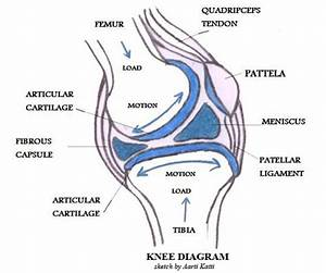 A Diagrammatic Explanation Of The Parts Of The Human Knee