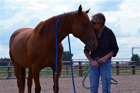 bond horse human heartbeat synchronized key horses humans paulickreport