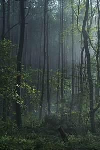 Free, Images, Tree, Nature, Outdoor, Swamp, Wilderness, Branch, Wood, Fog, Mist, Sunlight