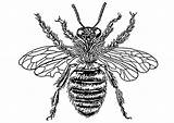 Bee Queen Coloring Printable Pages sketch template