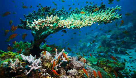 warming oceans killing coral reefs antarctica journal