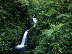 Costa Rica's Monteverde Cloud Forest - The Costa Rican Times Costa Rica
