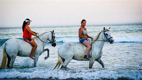 balade a cheval la rochelle tout sur le cheval