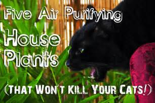 cat safe plants five air purifying house plants that won t your cat