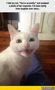 19 white cat memes animal pictures cat