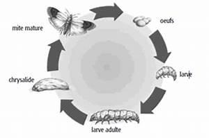 Mites Alimentaires Cycle De Reproduction : pi ge mites alimentaires aeroxon tout pour les nuisibles ~ Dailycaller-alerts.com Idées de Décoration