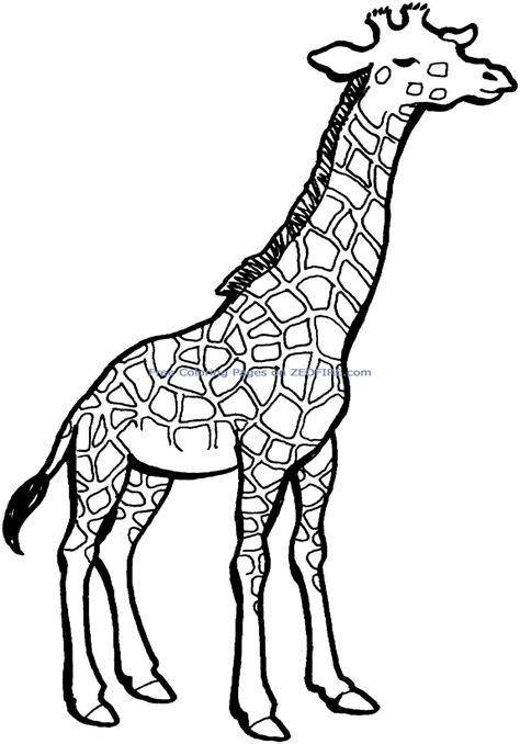 giraffe coloring pages coloringsuitecom