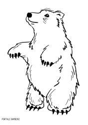 disegni  orsi da stampare  colorare gratis portale