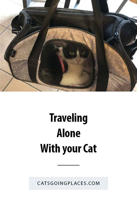 sherpa pet carrier traveling alone with your cat cats going places